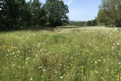 Wildflower Meadows & Orchards